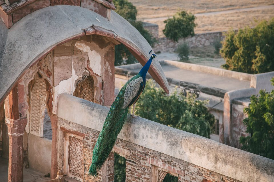 Photo of the day – Nagaur Fort